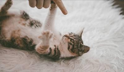 人の手と戯れる子猫