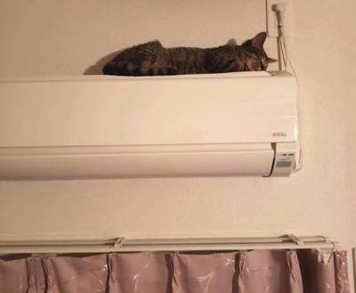 エアコンにのぼった猫
