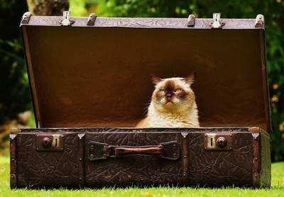 カバンに入った猫