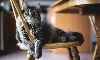 椅子に乗った猫