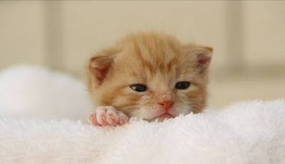 布団の上の子猫