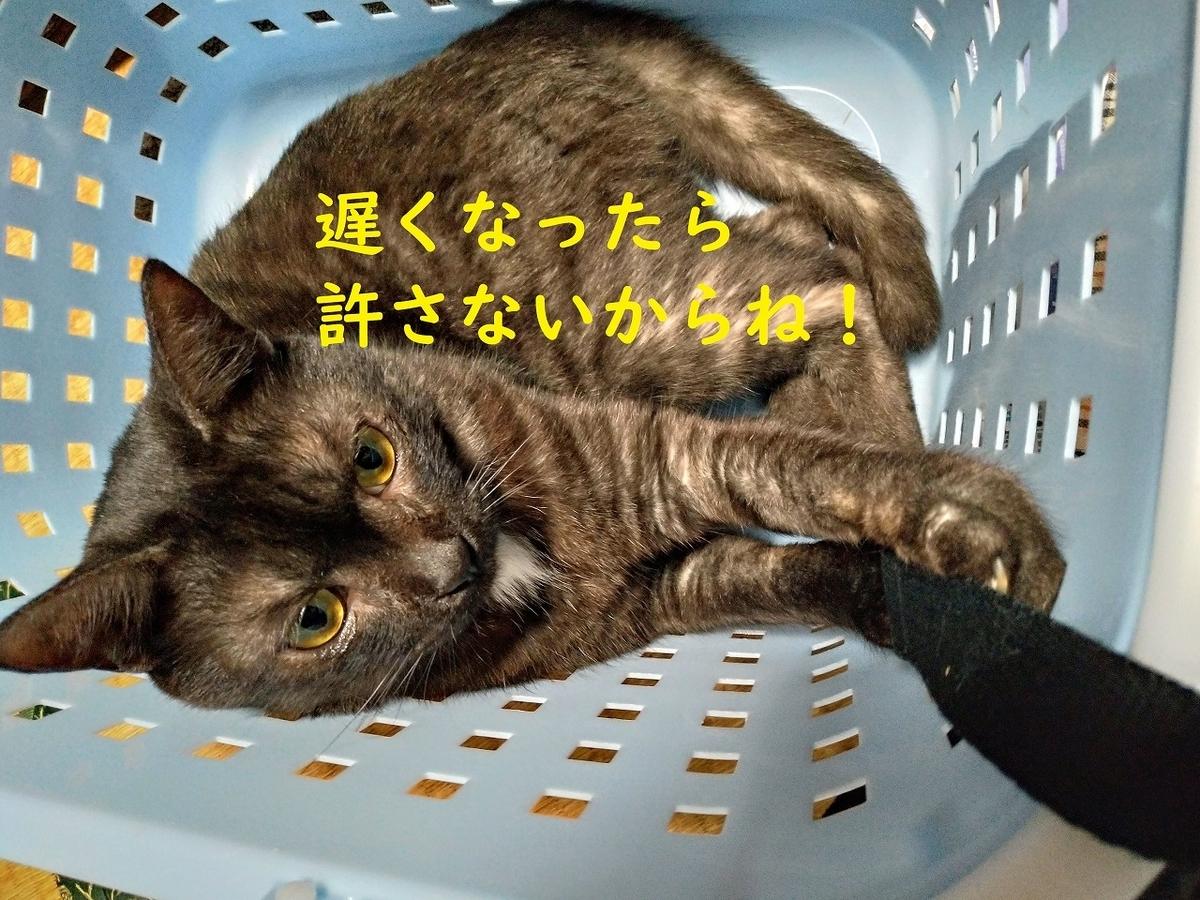 f:id:Harufuku:20190330200207j:plain