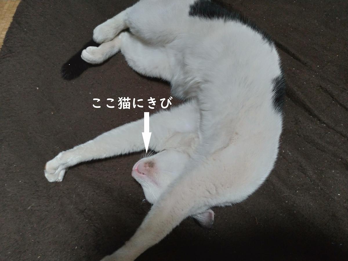 f:id:Harufuku:20190409140220j:plain