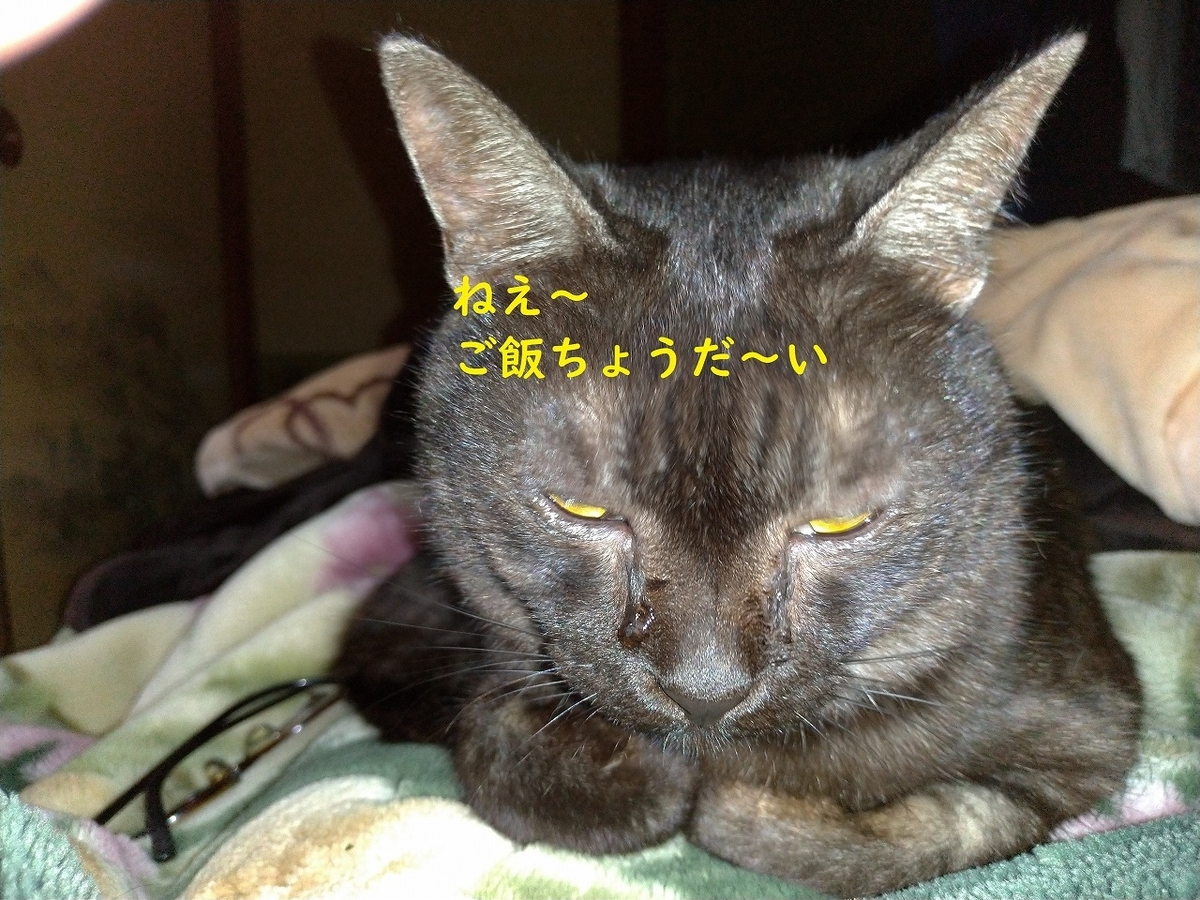f:id:Harufuku:20190410173233j:plain