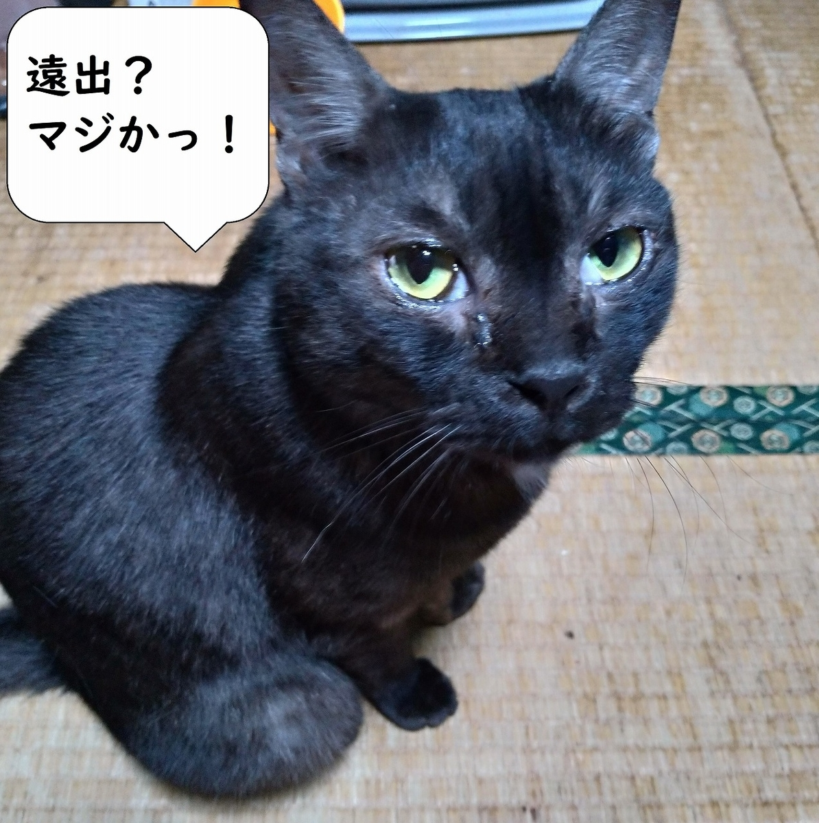 f:id:Harufuku:20190424110442j:plain