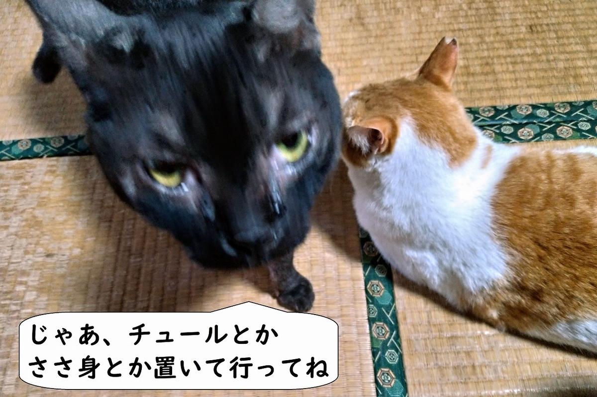 f:id:Harufuku:20190424110949j:plain