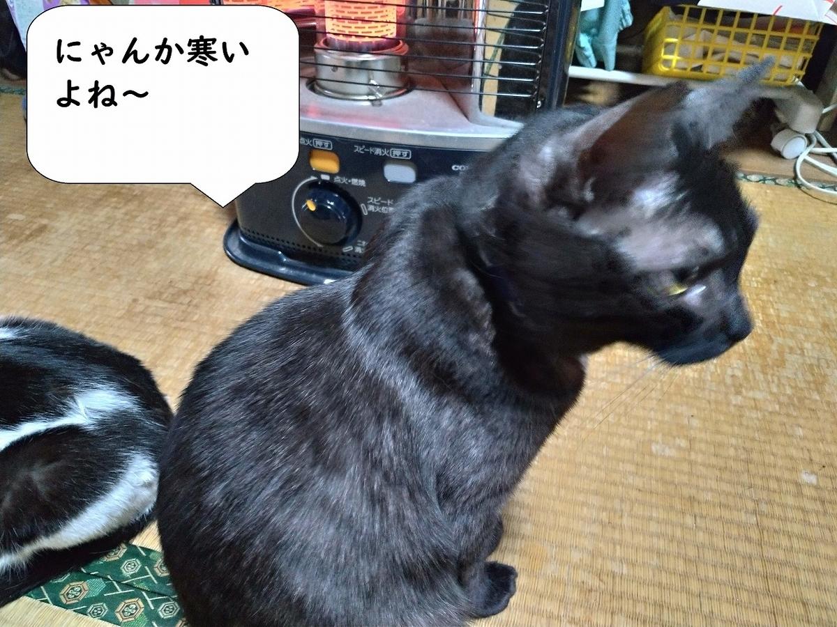 f:id:Harufuku:20190508103118j:plain