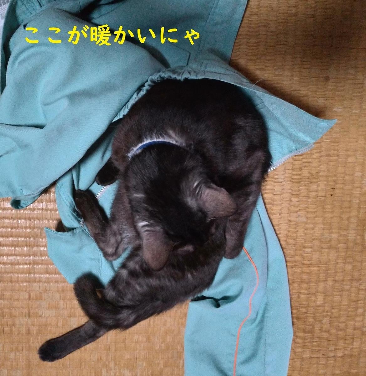 f:id:Harufuku:20190508103510j:plain
