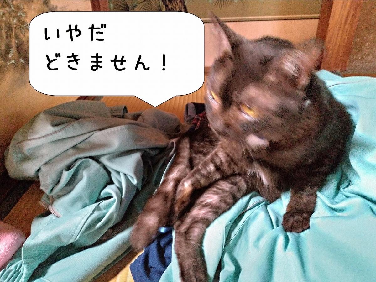 f:id:Harufuku:20190511193332j:plain