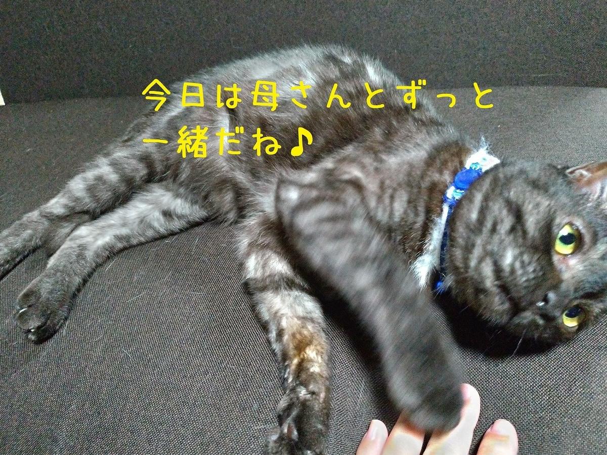 f:id:Harufuku:20190511193419j:plain