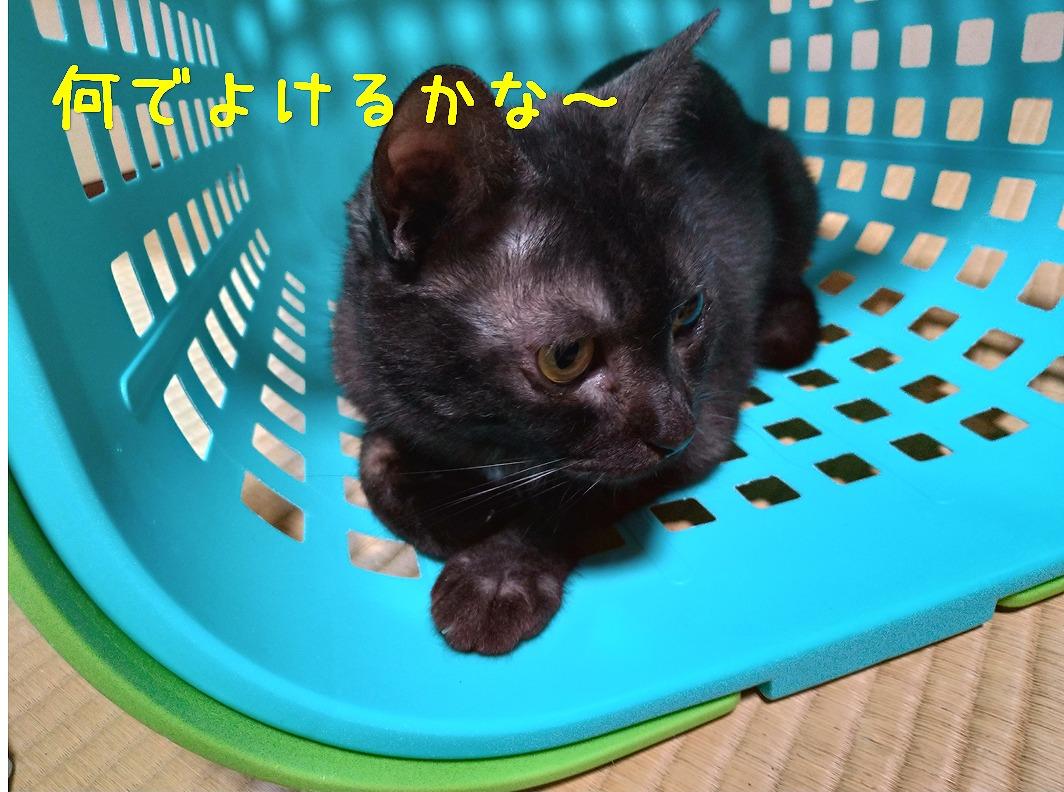 f:id:Harufuku:20190517094930j:plain