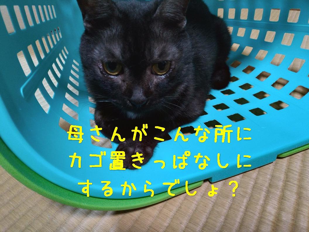 f:id:Harufuku:20190517095001j:plain