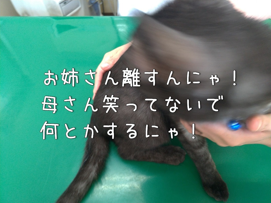 f:id:Harufuku:20190623192618j:plain