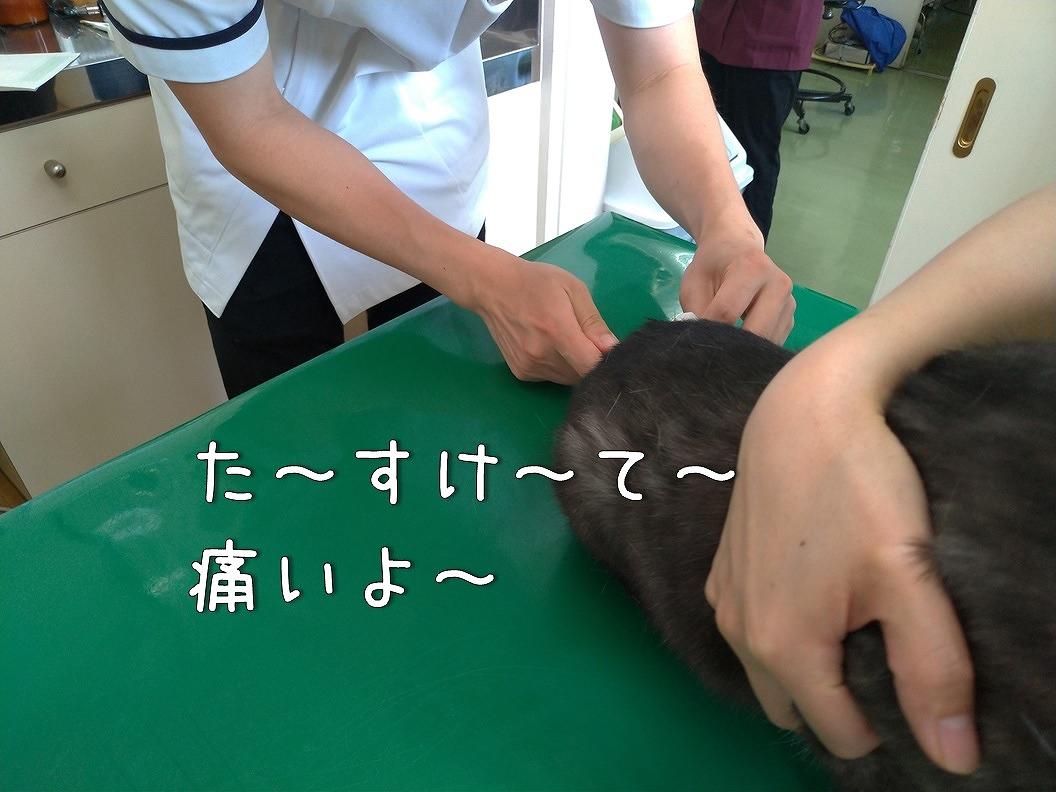 f:id:Harufuku:20190623192702j:plain