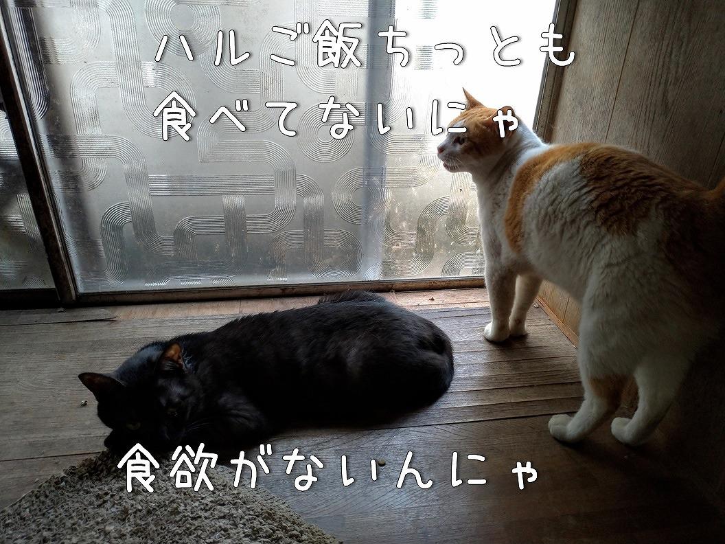 f:id:Harufuku:20190623192740j:plain