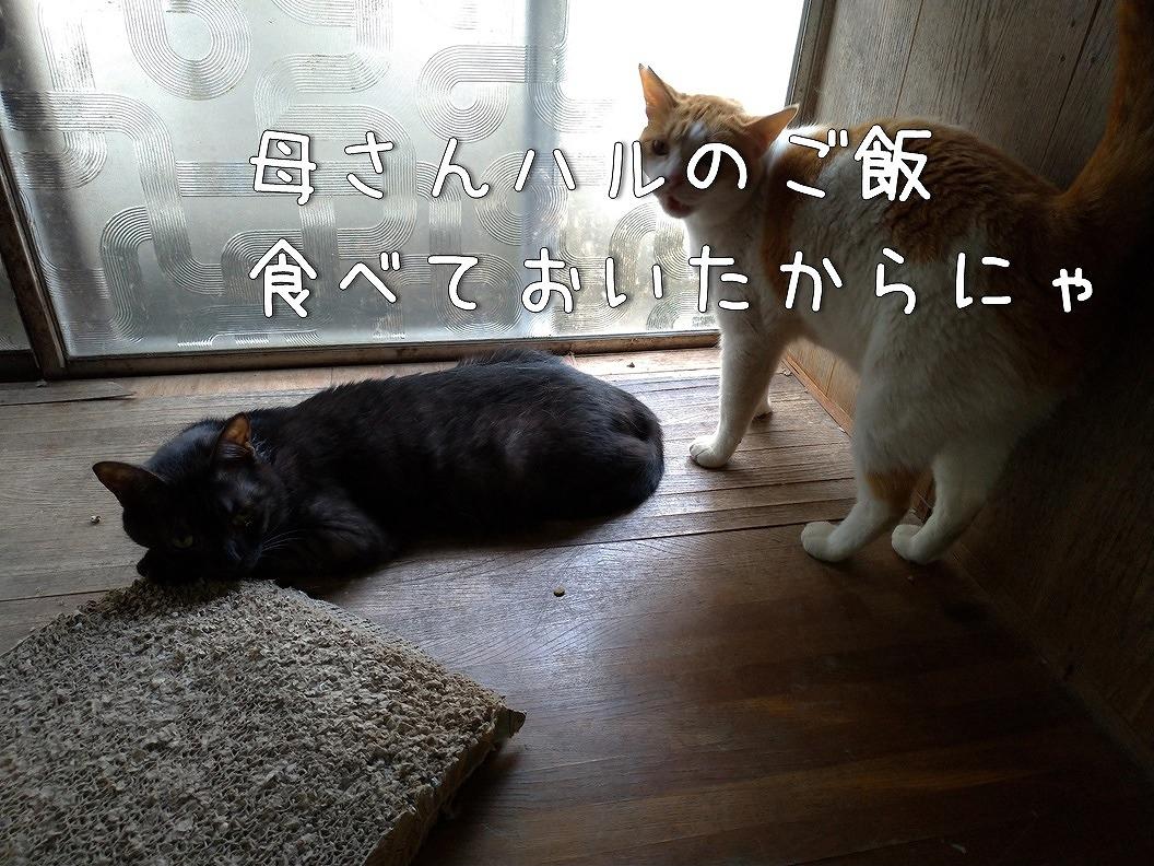 f:id:Harufuku:20190623192812j:plain