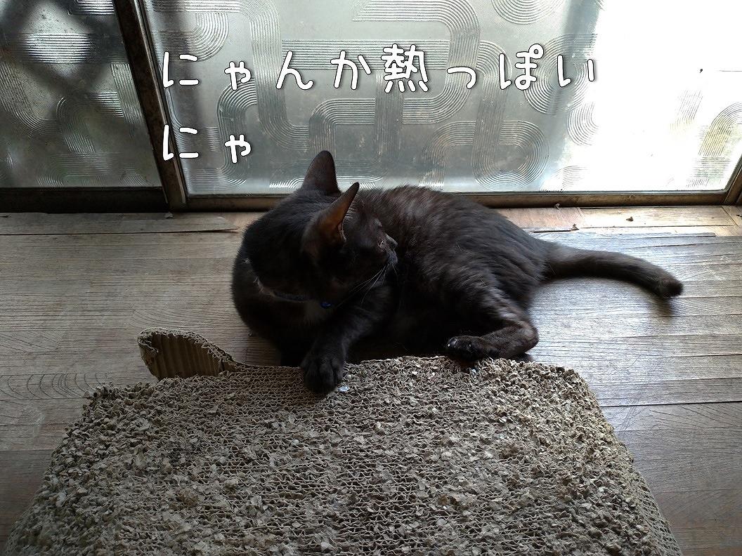 f:id:Harufuku:20190623192858j:plain