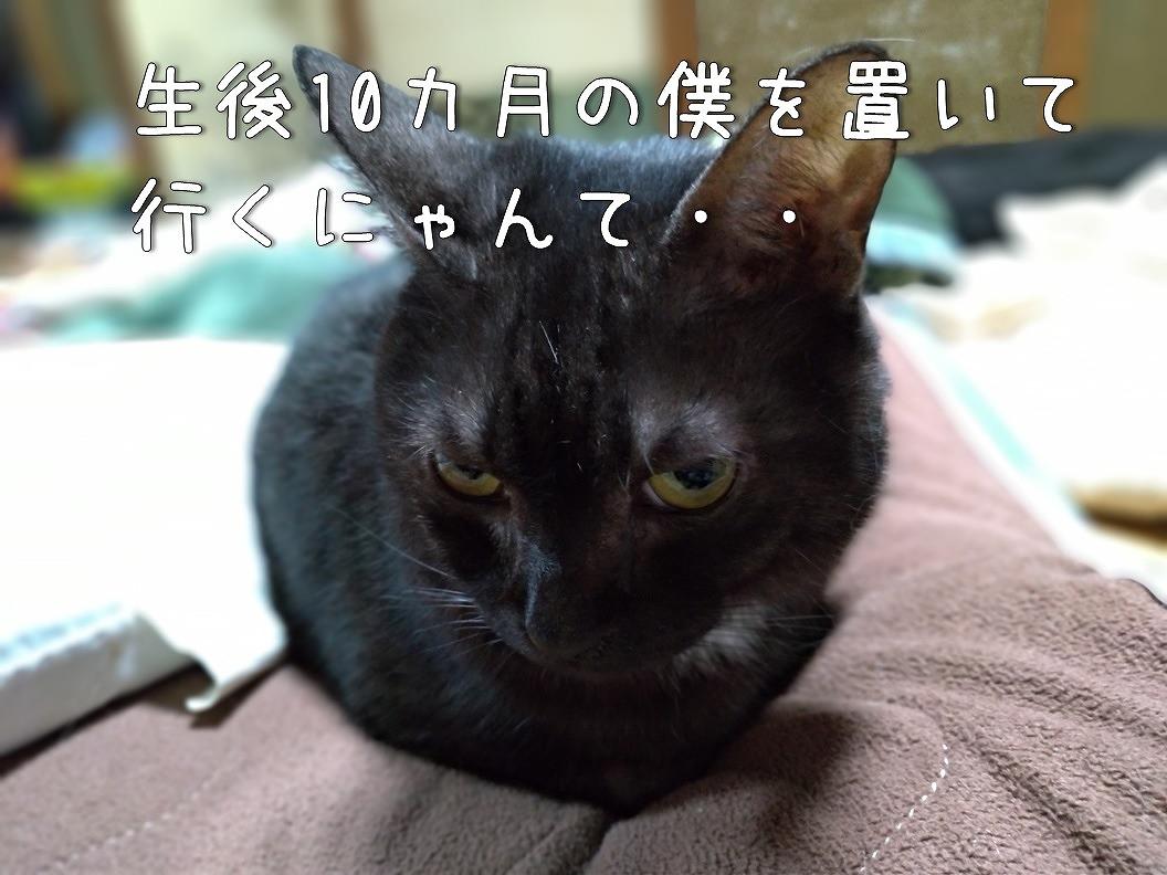 f:id:Harufuku:20190624134221j:plain