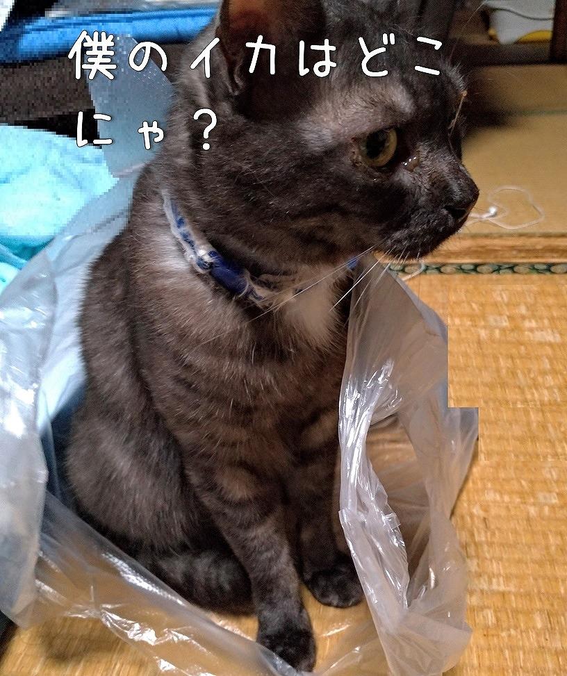 f:id:Harufuku:20190627161642j:plain