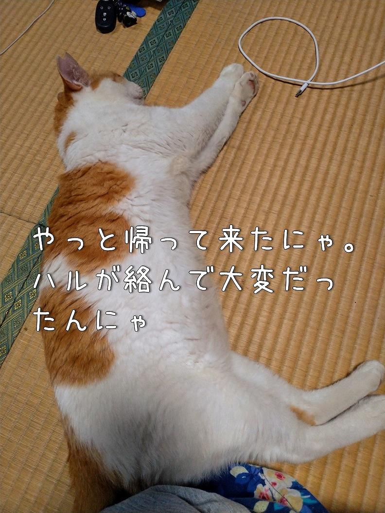 f:id:Harufuku:20190812222231j:plain