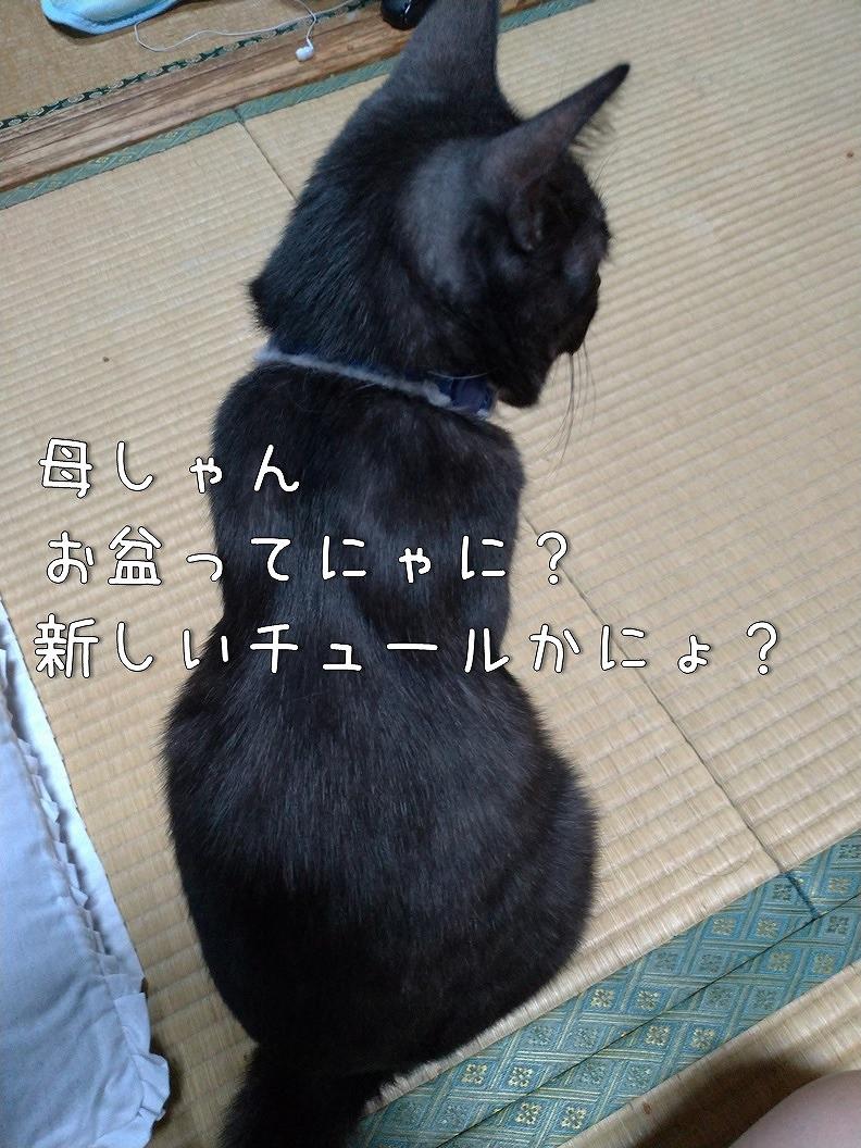 f:id:Harufuku:20190813210727j:plain