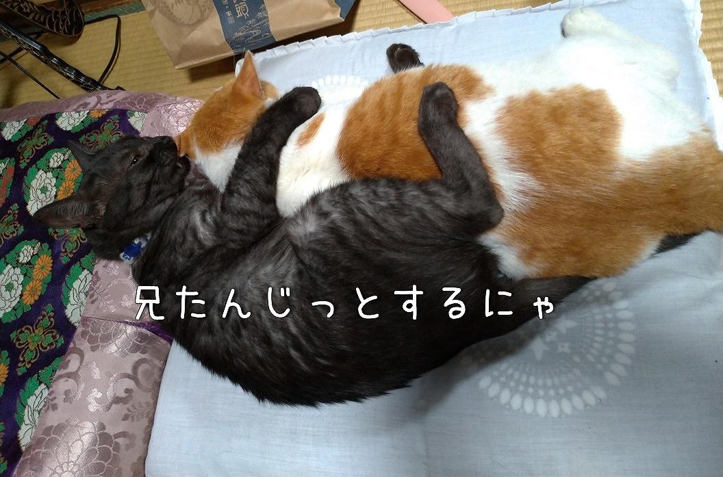 f:id:Harufuku:20190814202518j:plain