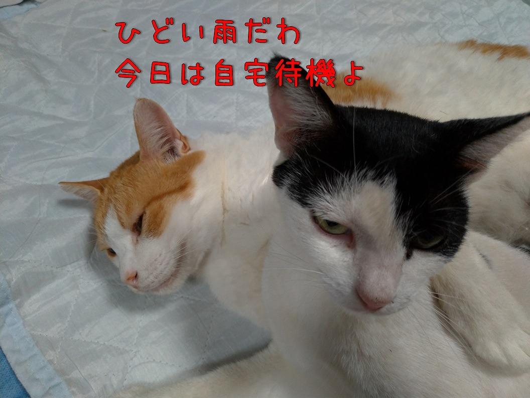 f:id:Harufuku:20190815192833j:plain