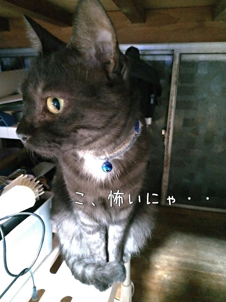 f:id:Harufuku:20190816212436j:plain