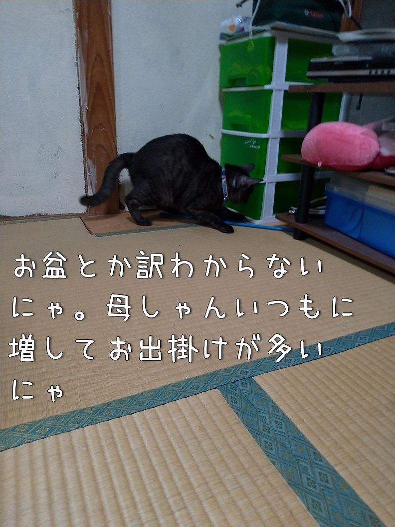 f:id:Harufuku:20190817220344j:plain