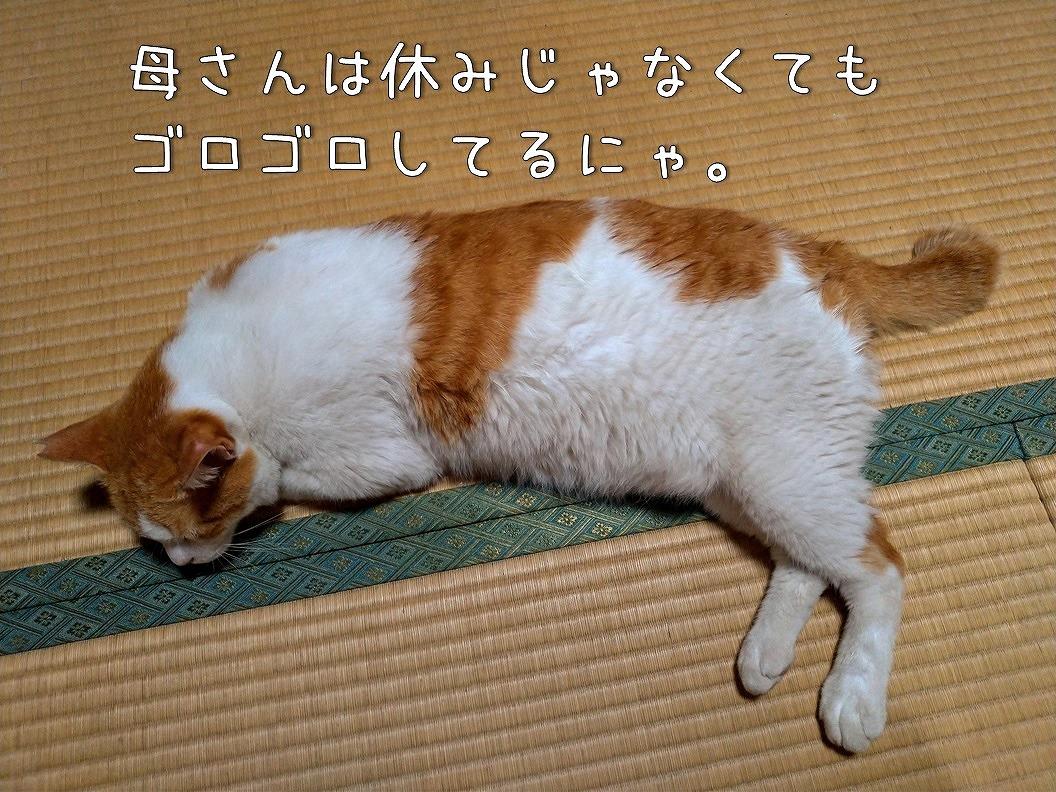f:id:Harufuku:20190818191811j:plain