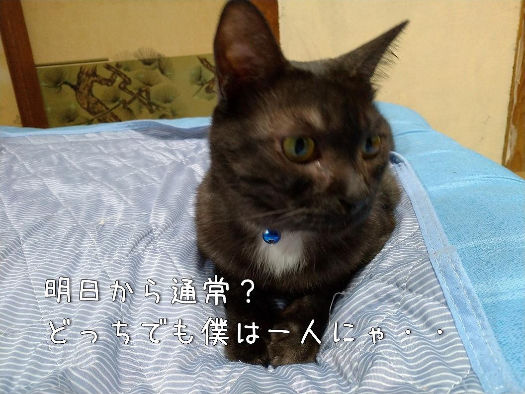 f:id:Harufuku:20190818193703j:plain
