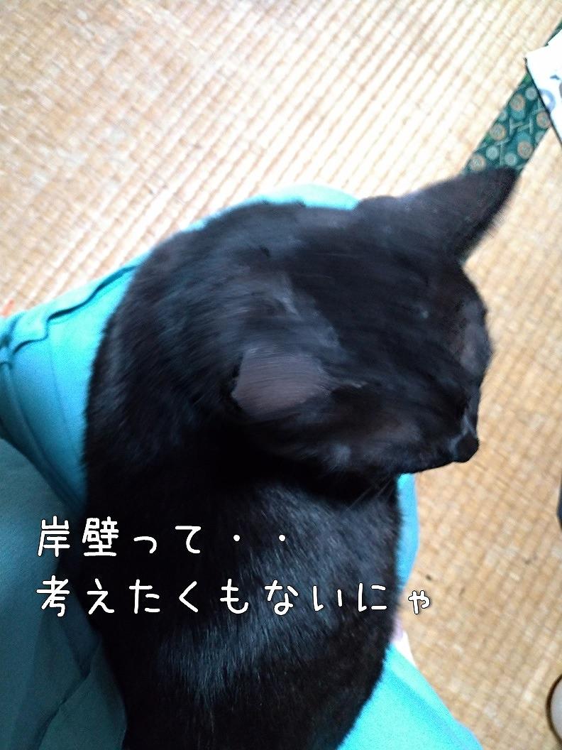f:id:Harufuku:20191017140025j:plain