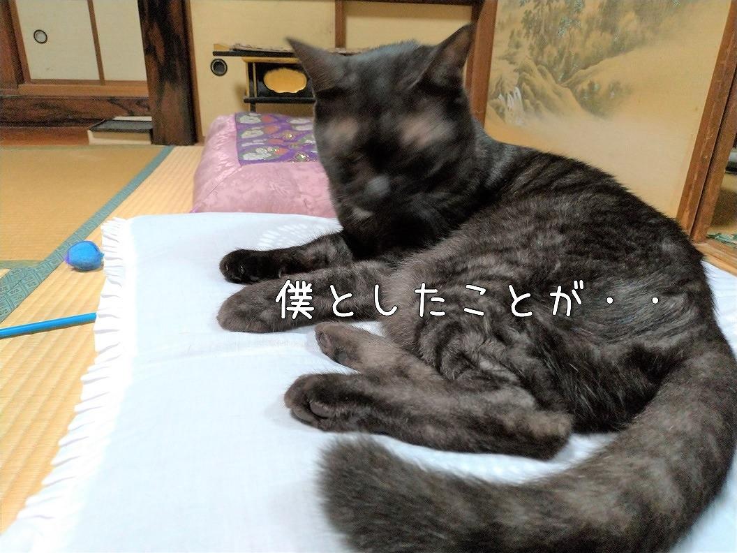 f:id:Harufuku:20191019195004j:plain