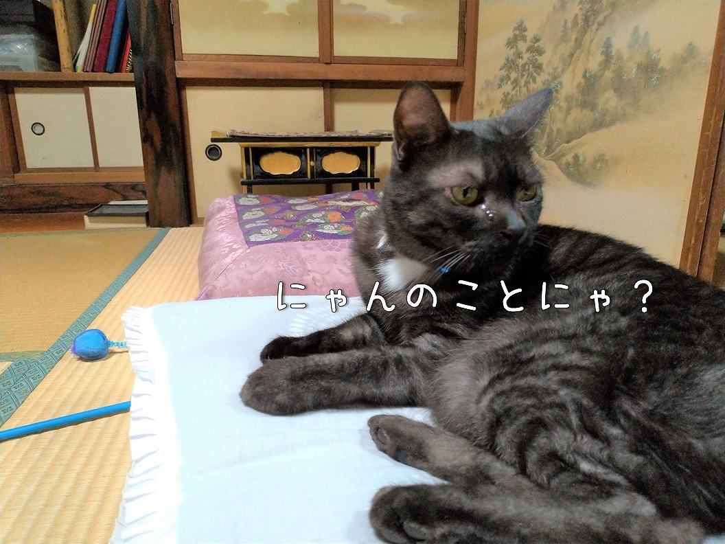 f:id:Harufuku:20191019195043j:plain