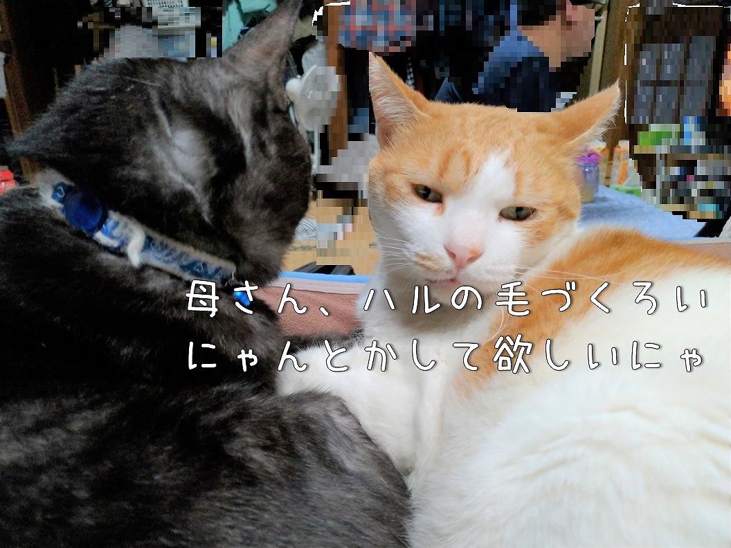 f:id:Harufuku:20191020171612j:plain