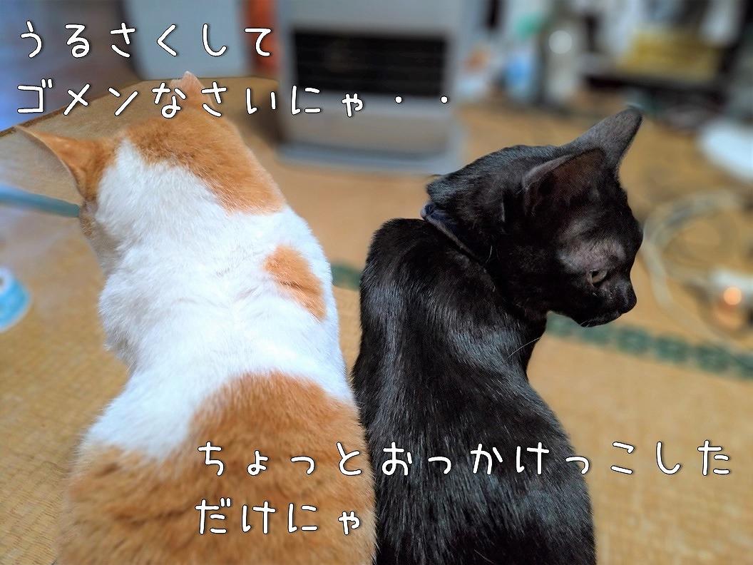f:id:Harufuku:20200629102656j:plain