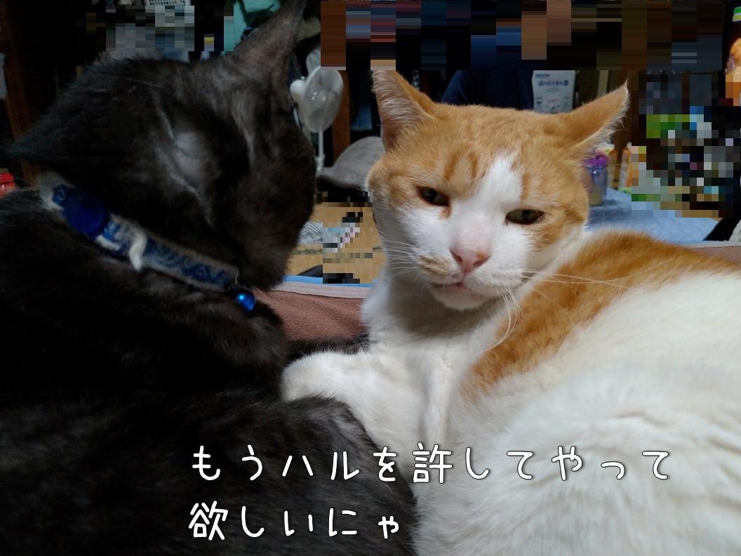 f:id:Harufuku:20200629102734j:plain