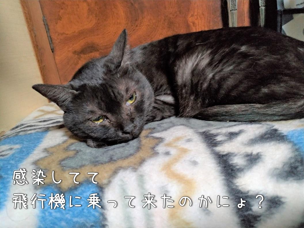 f:id:Harufuku:20200630151608j:plain