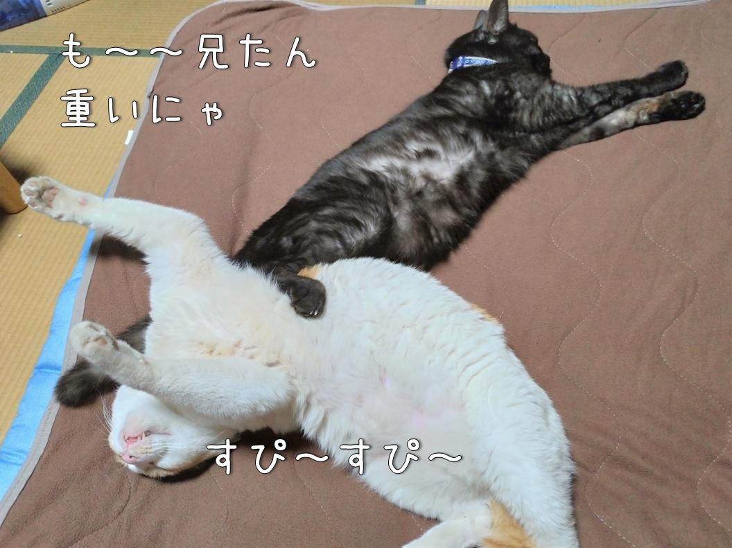 f:id:Harufuku:20200701115008j:plain