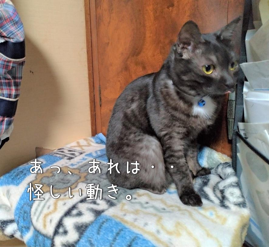 f:id:Harufuku:20200703114248j:plain