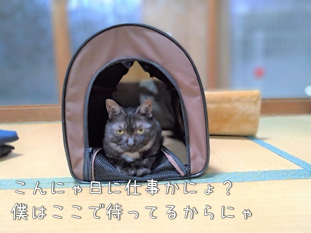 f:id:Harufuku:20200707141303j:plain