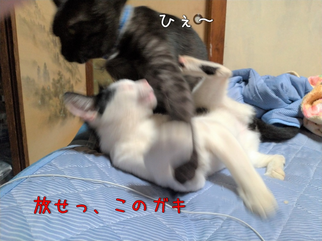 f:id:Harufuku:20200717113826j:plain