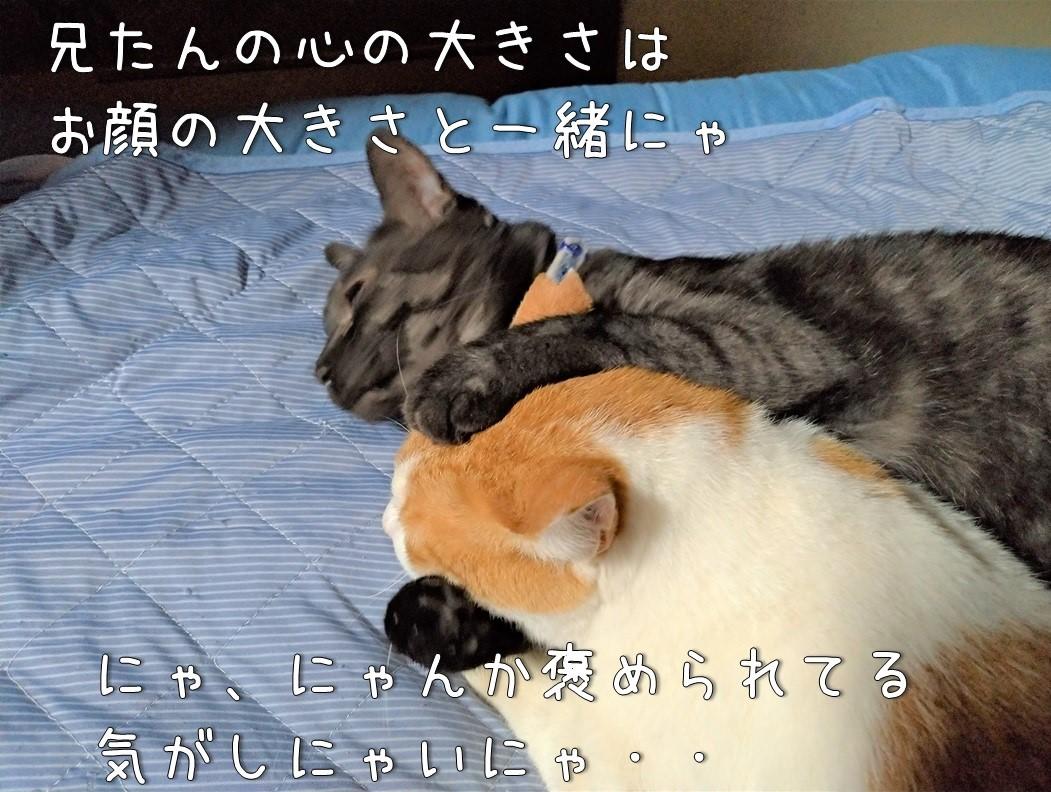 f:id:Harufuku:20200717114646j:plain