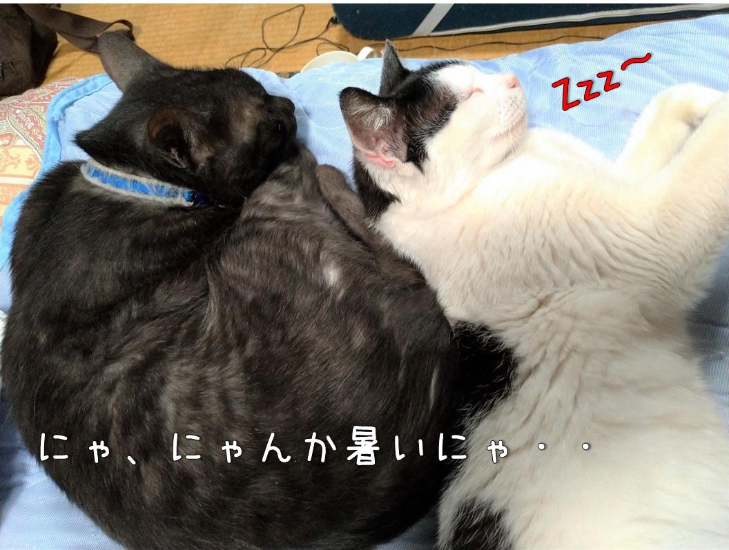 f:id:Harufuku:20200804112626j:plain
