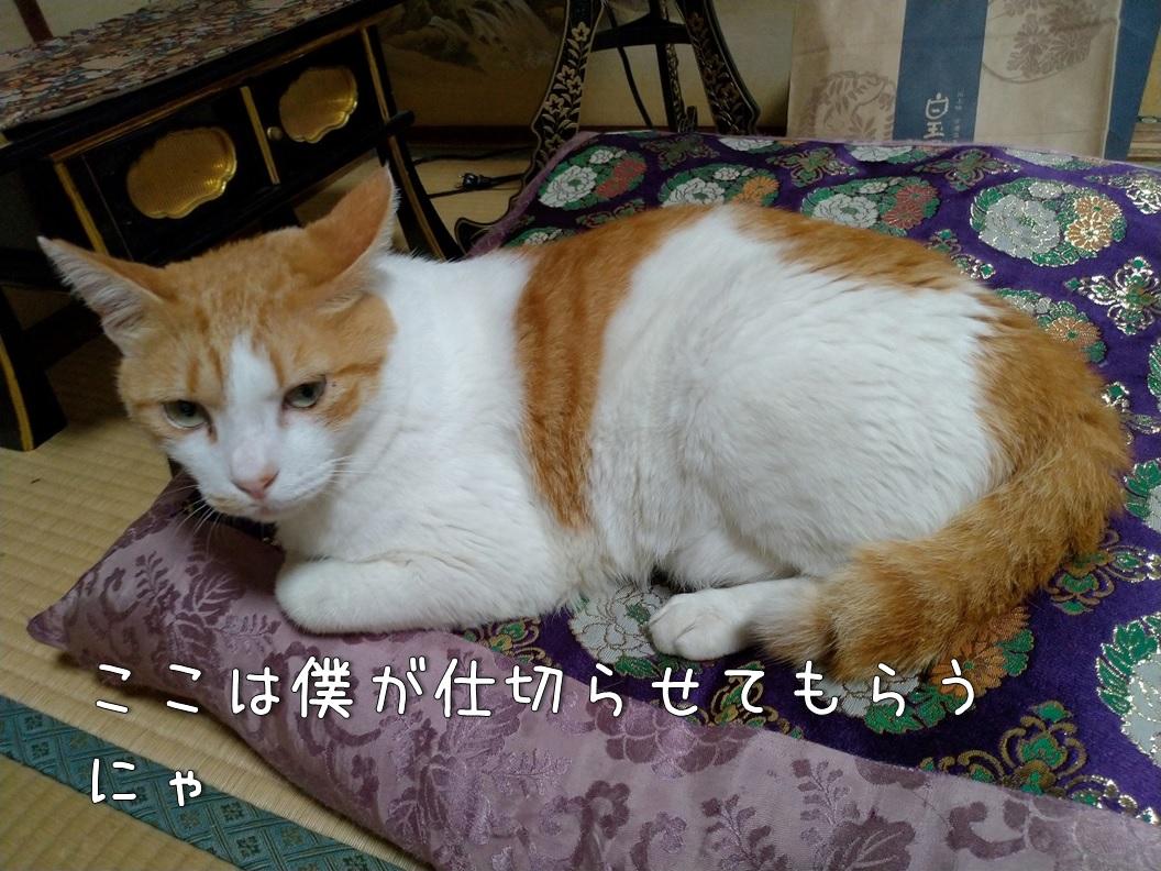 f:id:Harufuku:20200805110420j:plain