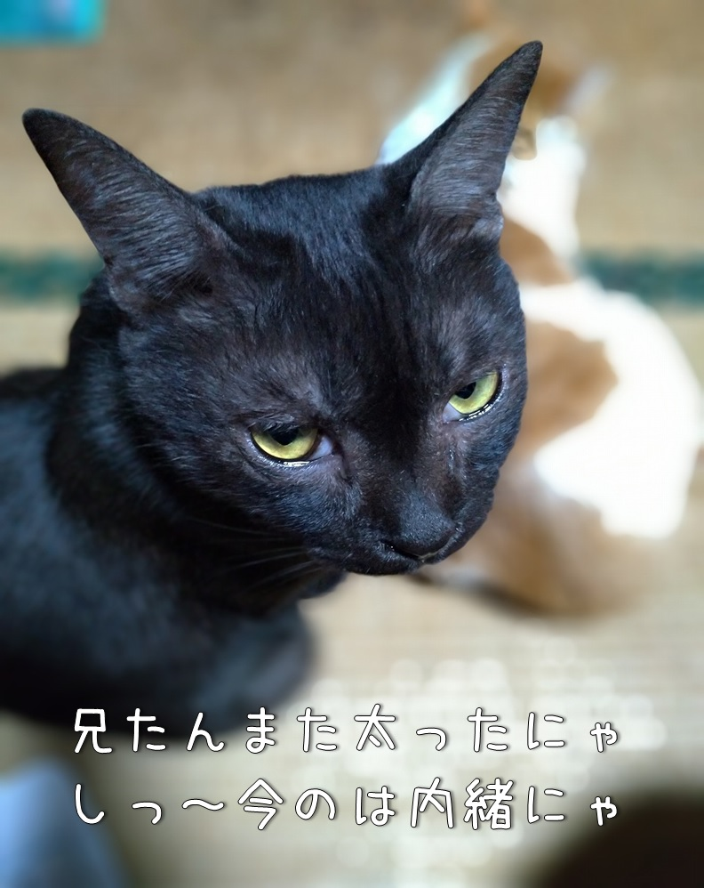 f:id:Harufuku:20200806103205j:plain