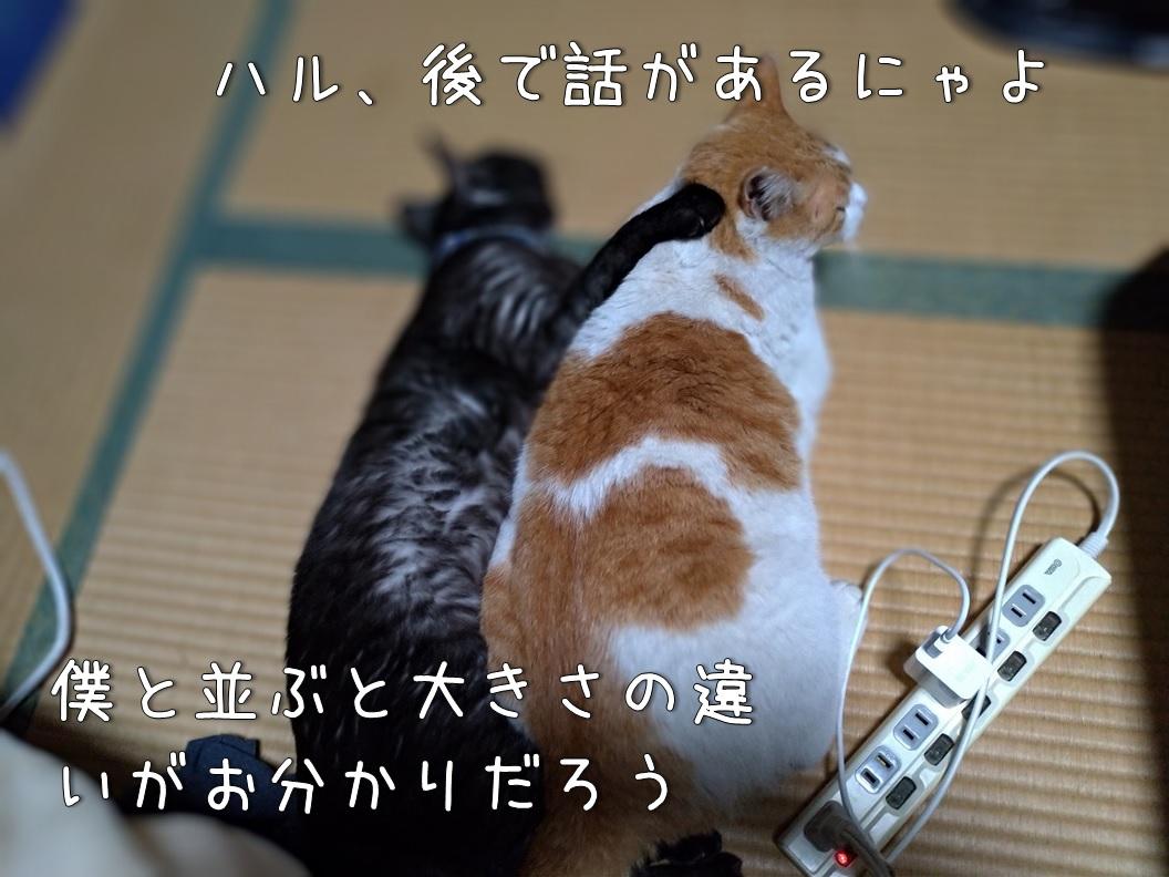 f:id:Harufuku:20200806103555j:plain