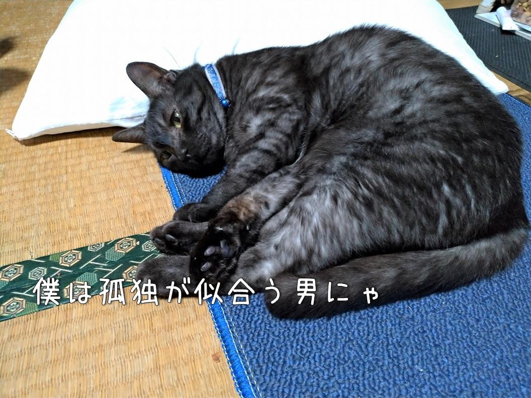 f:id:Harufuku:20200828174634j:plain