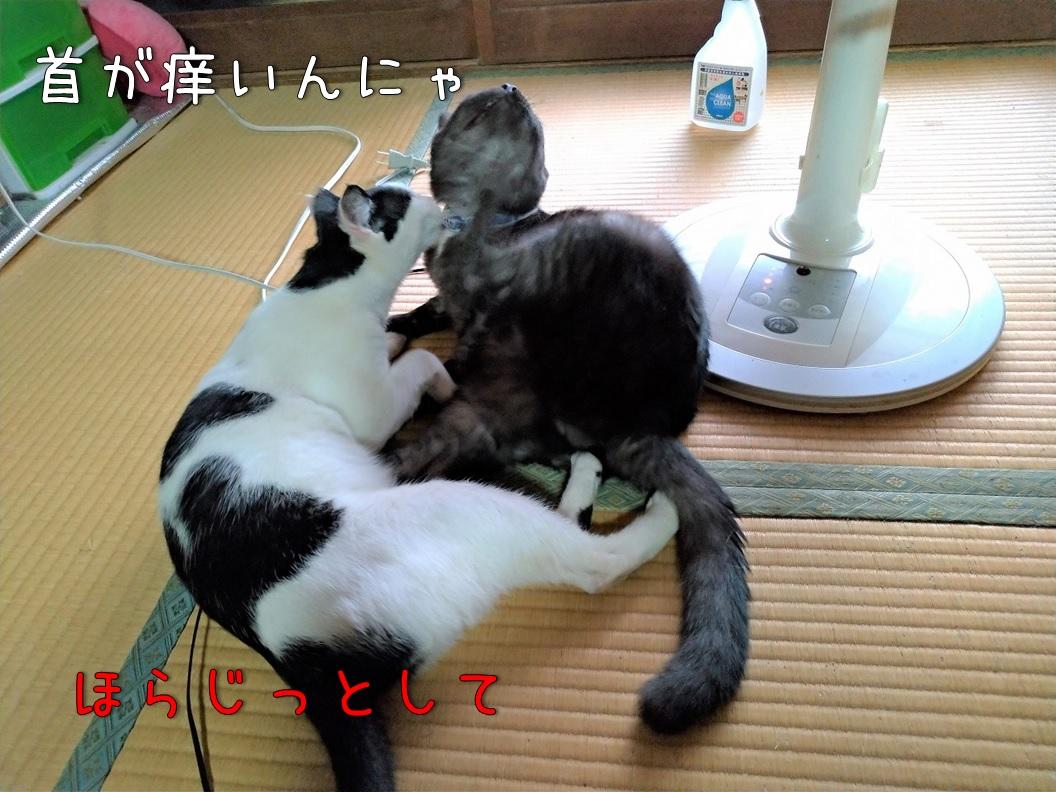 f:id:Harufuku:20200831113013j:plain
