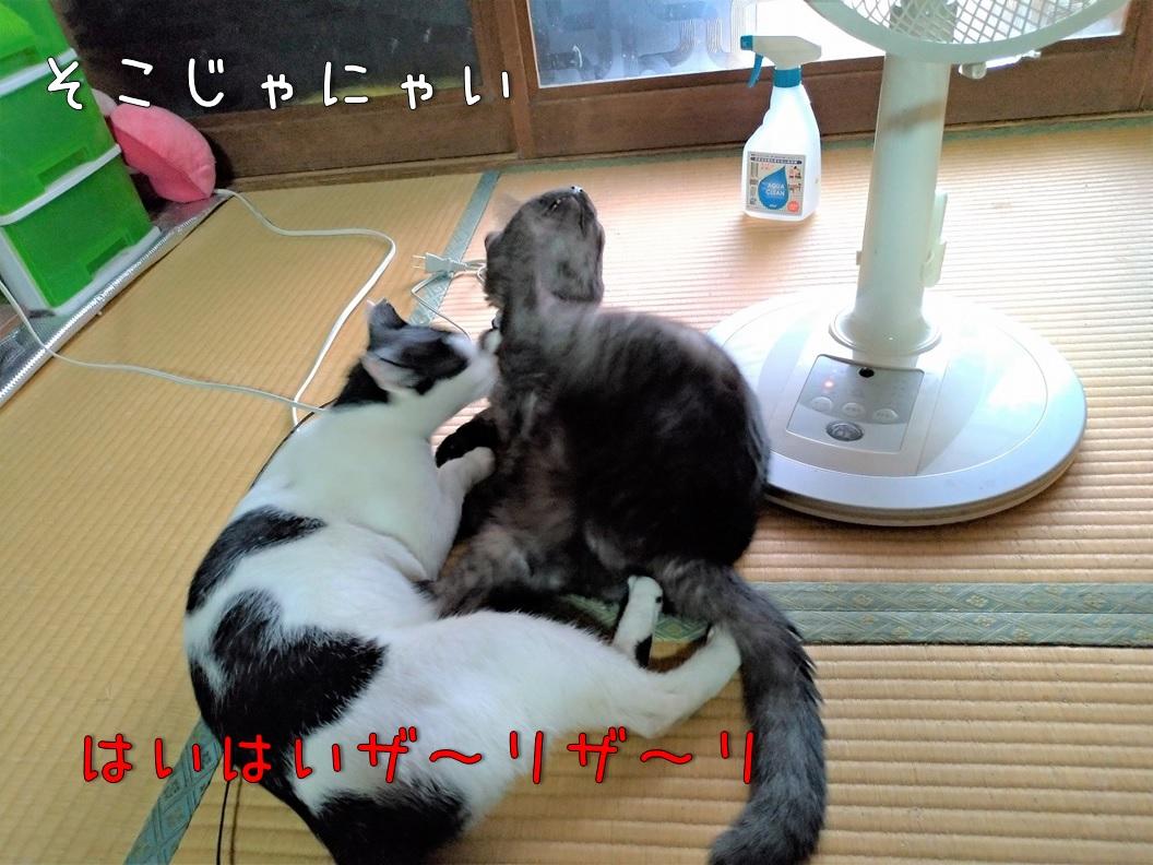 f:id:Harufuku:20200831113105j:plain